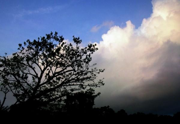 Silohuette of Trees