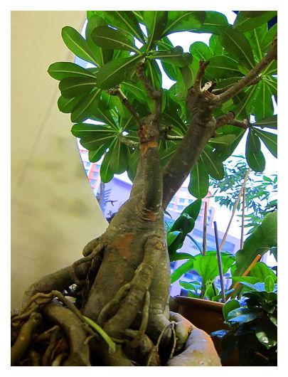 Mini Potted Plant