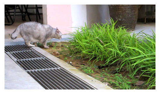 Cat - sniffing out something in the bushes
