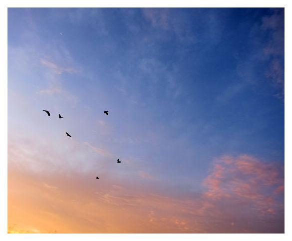 Birds over Sengkang, Singapore