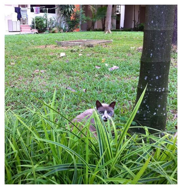 Cat in Sengkang, Singapore