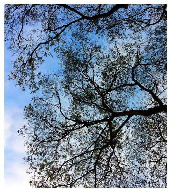 Trees, Singapore