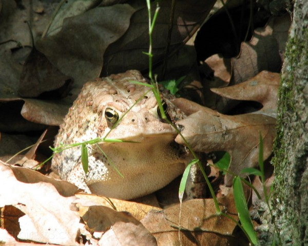 Frog in the wood