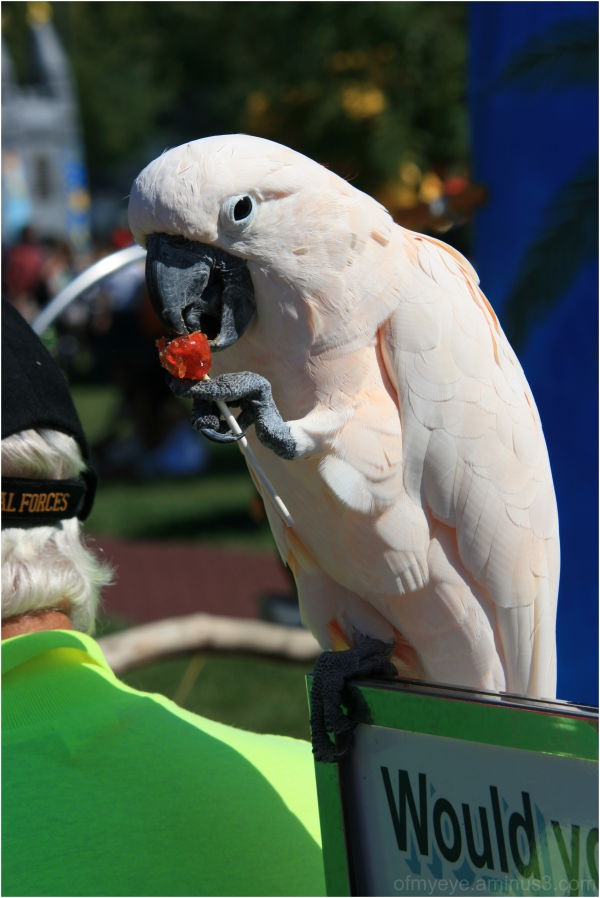 The bird liked lollipops...