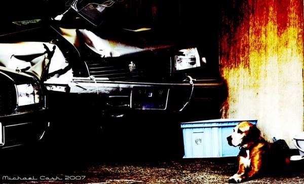 Junkyard dog in Kawasaki, Japan