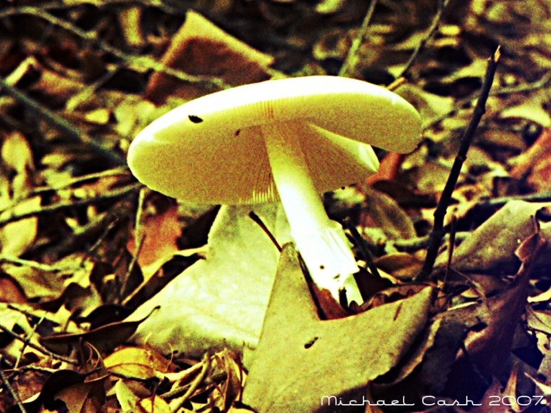 Unknown mushroom, Azuma Park, Kiryu, Japan