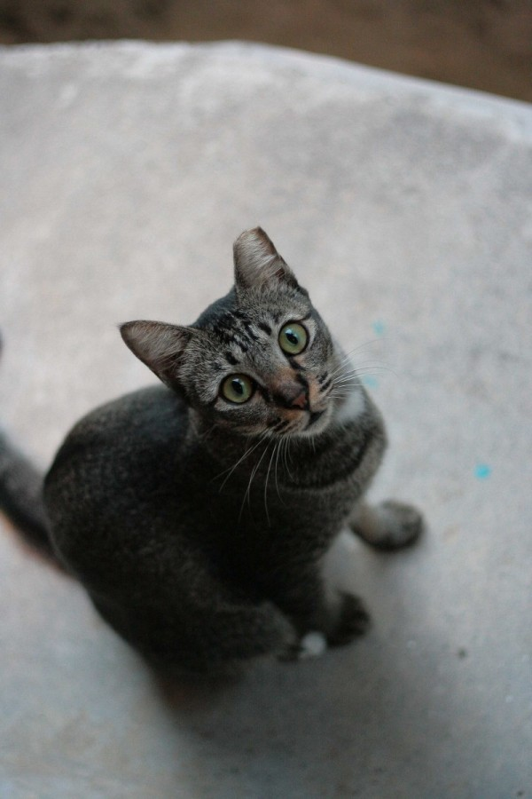 meow looks up.. meow