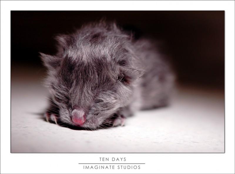 A ten week old kitten