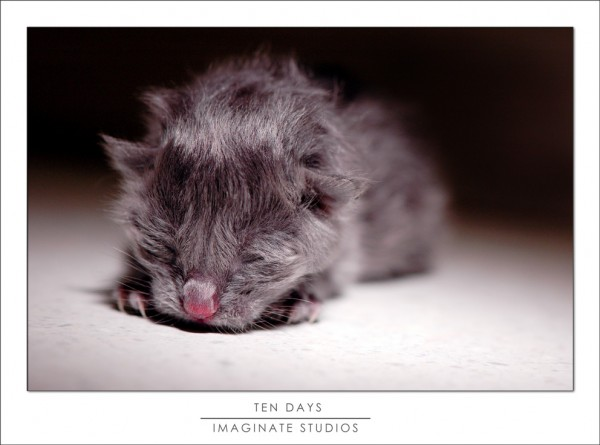 A ten week old kitten's fate rests in our hands.