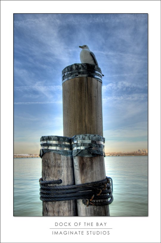 seagull dock sky new york statue of liberty island