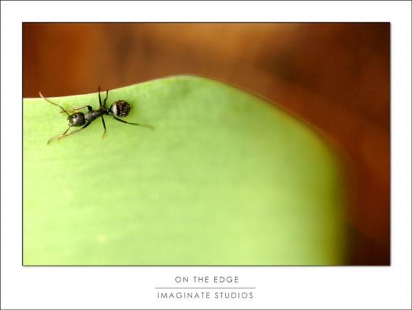 an ant walks along the edge of a leaf
