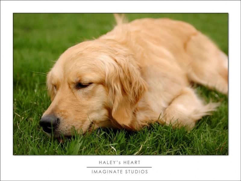 Haley has congenital mitral valve dysplasia