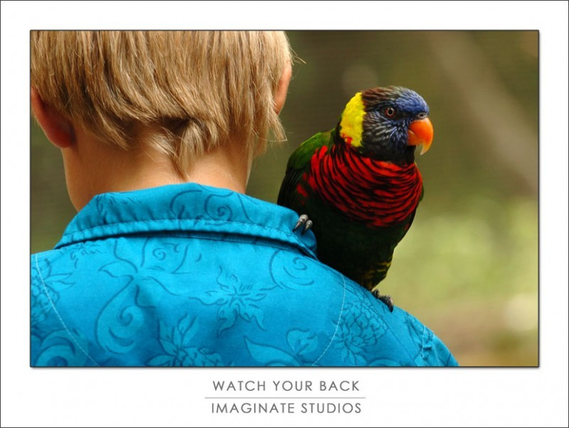 A rainbow lorikeet lands on a child's shoulder