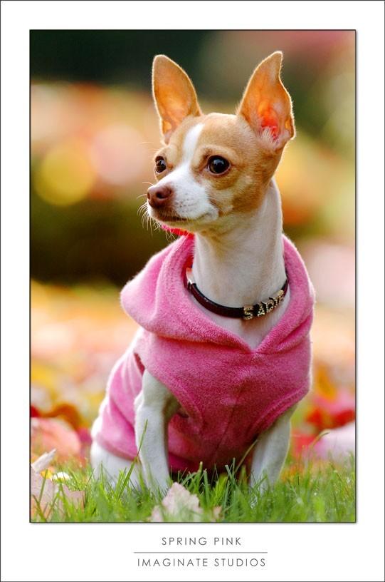 Sadie modeling Angel Ragz