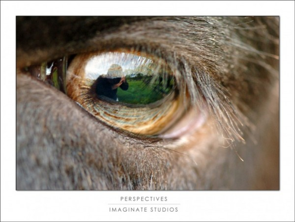 a self portrait in a suffolk sheep's eye