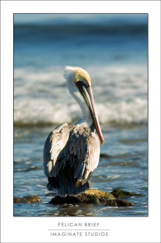 A pelican suns on the beach in Malibu