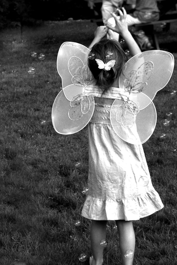 Ariana butterfly