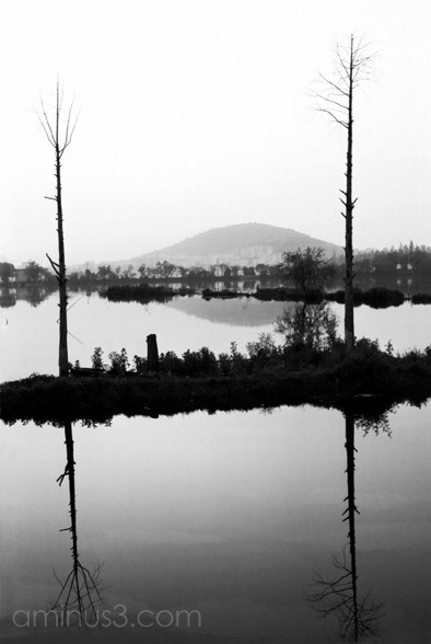 Moshan Reflections 2