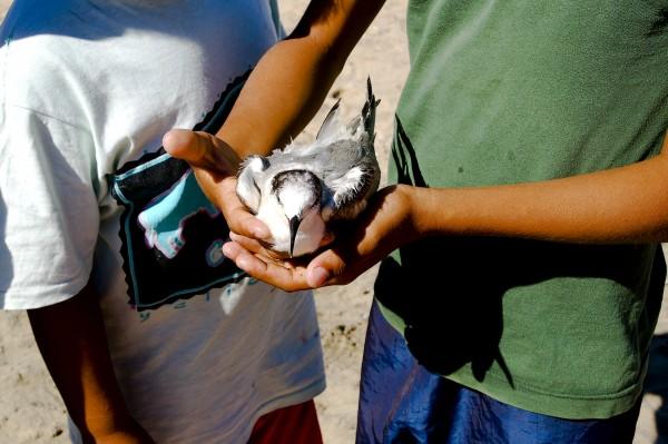 Injured little bird