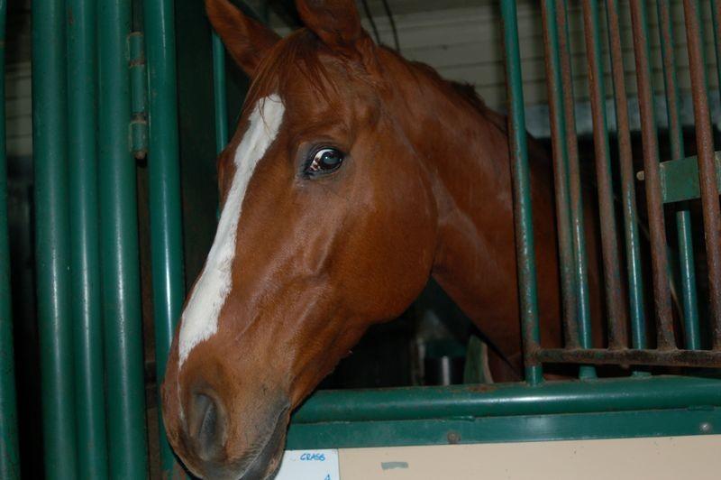 A HORSE NAMED OTTO