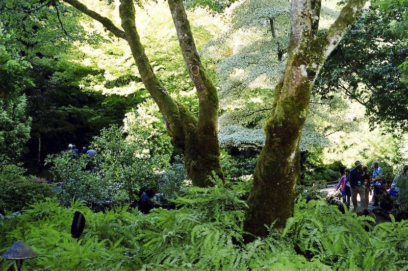 Tree - Japanese Garden