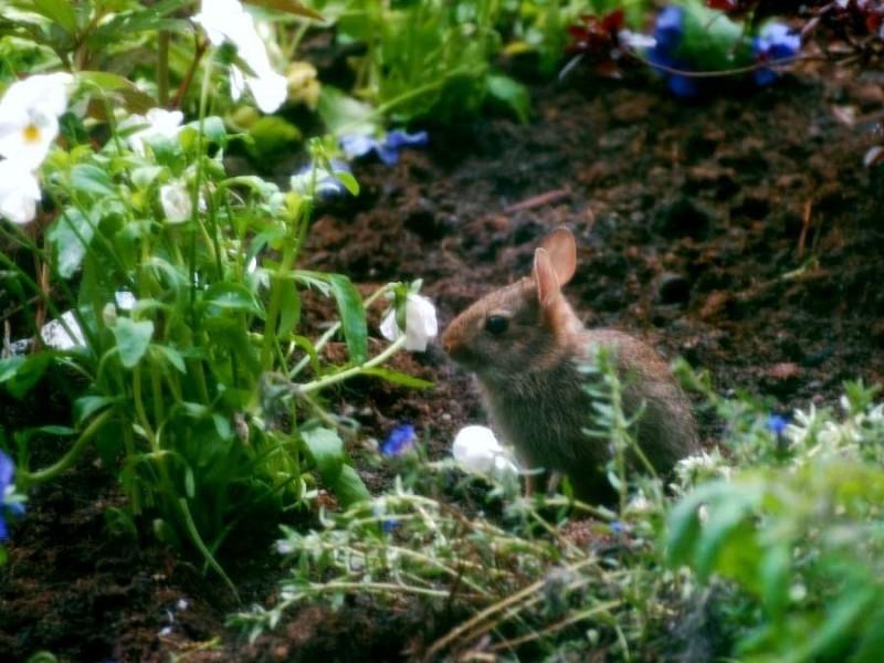 New Baby Bunny