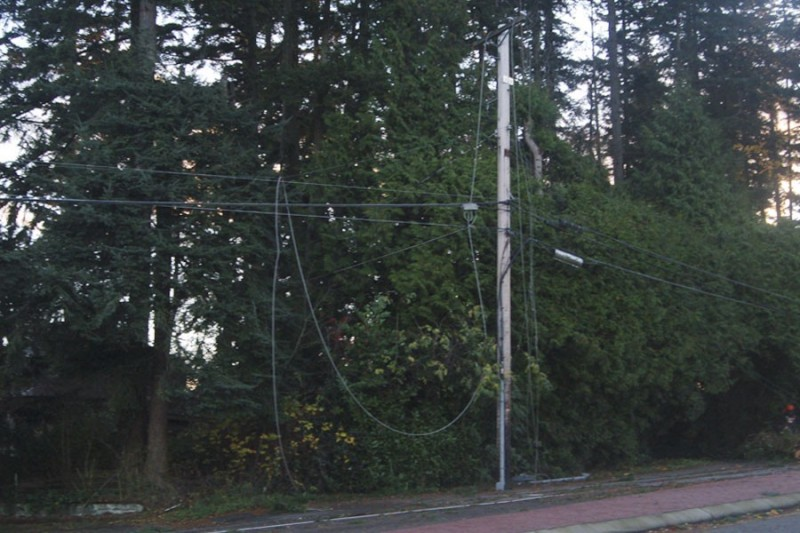 Power Lines Down after Fir blown down