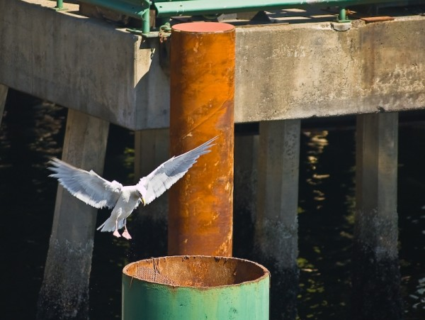 The Seagull Is Landing