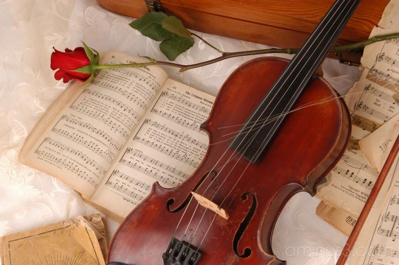 violin roses music