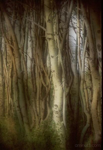 Sureal twisted trees