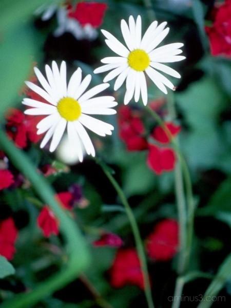white flowers nature pretty