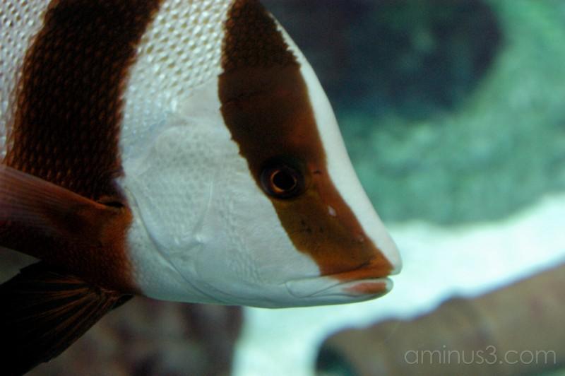 Casino Winnipeg aquarium fish