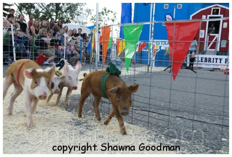 pig races, fair Regina Exhibition