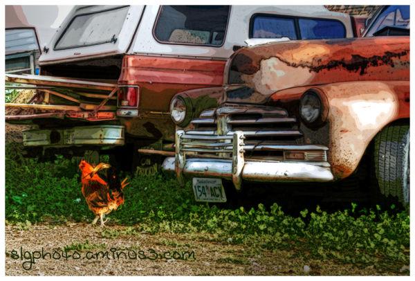 Wolsley Saskatchewan  Chicken