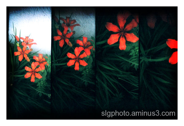 supersampler Regina Saskatchewan Canada flowers