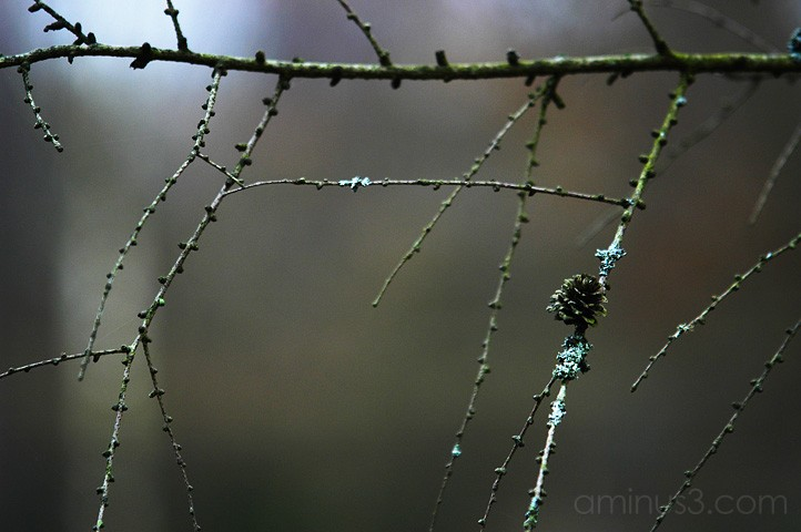 the woods, benno white photographer