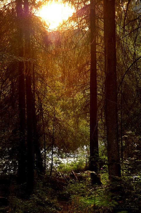 dusk, forest, alps, bavaria, benno white