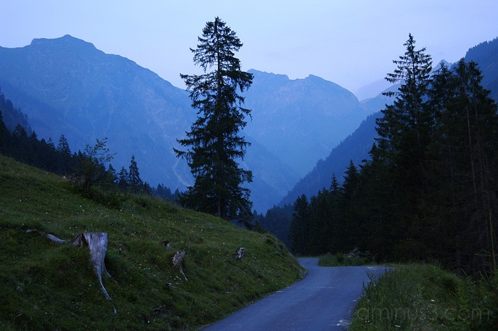 dusk, forest, alps, bavaria, benno white