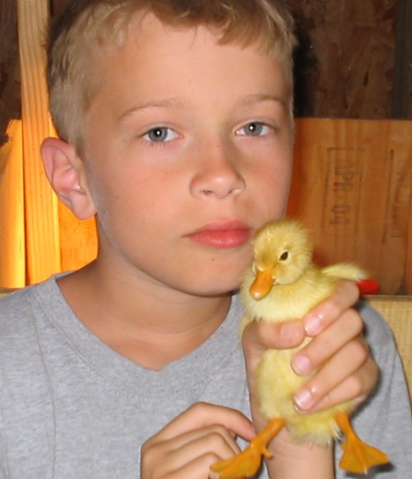 child and baby duck