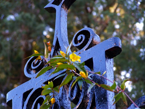 Wrought Iron Gate Flower