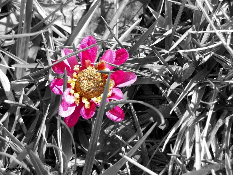 Silk Pink Flower