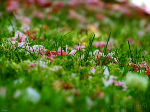 Low view of grass and pink petals