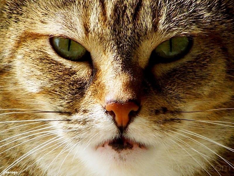 Tabby Cat Winnie