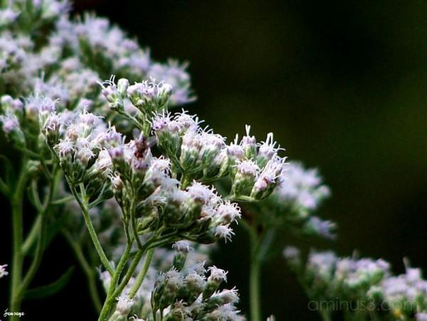 Wildflowers in Ocee Park Alpharetta GA