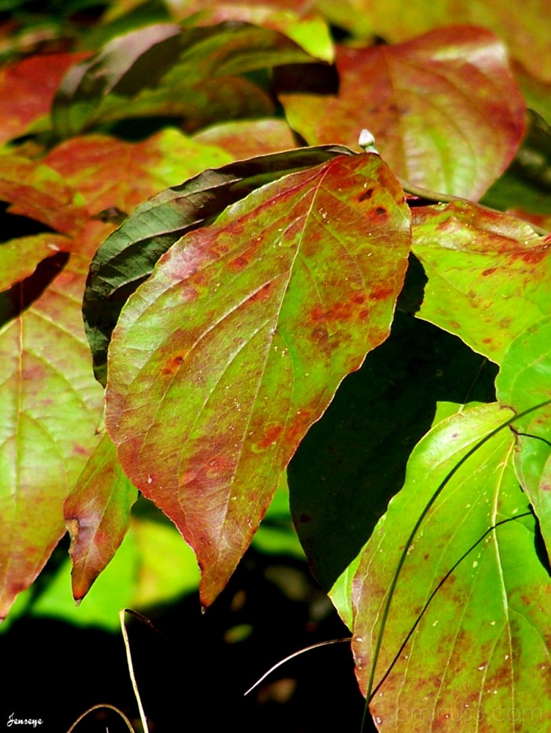 Fall foliage leaves