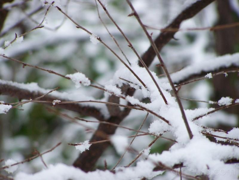 Plant Trees Snow