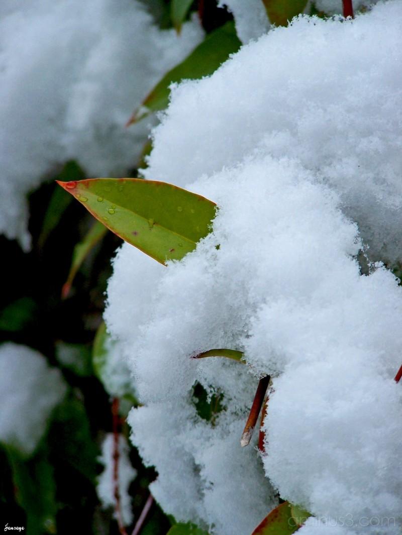 Plant Leaf Snow Georgia