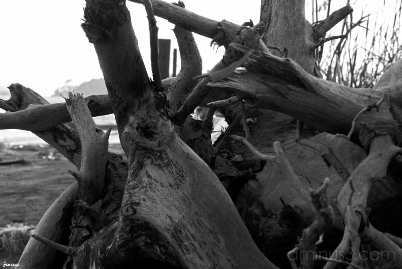 Tybee Island Driftwood