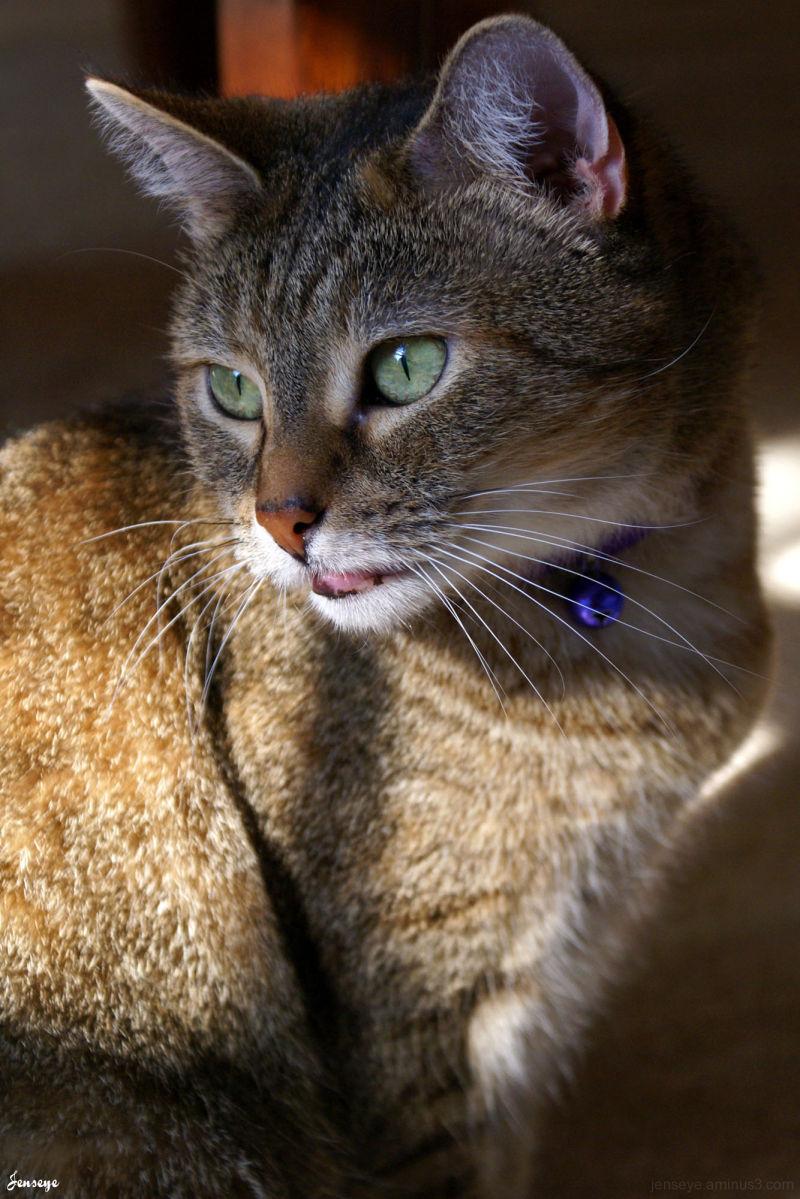 Portrait Tabby Cat Winnie