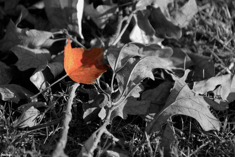 Selected Saturation Leaf